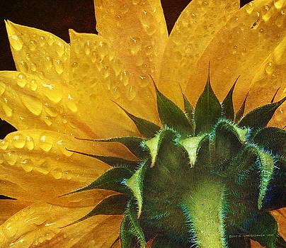 Rain Dappled Sunflower by R christopher Vest