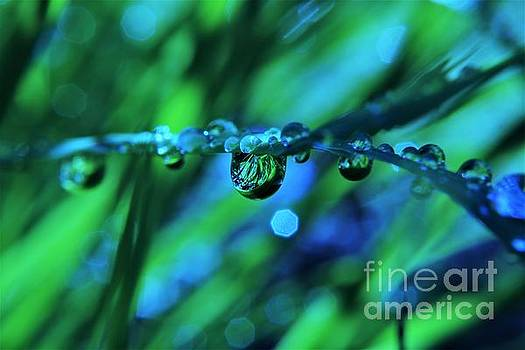 Rain Droplet Abstract by Dee Winslow