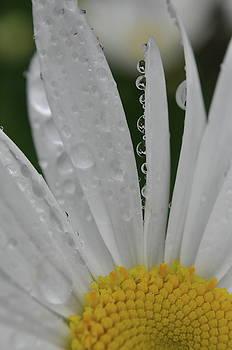 Rain drops by Emilia Brasier