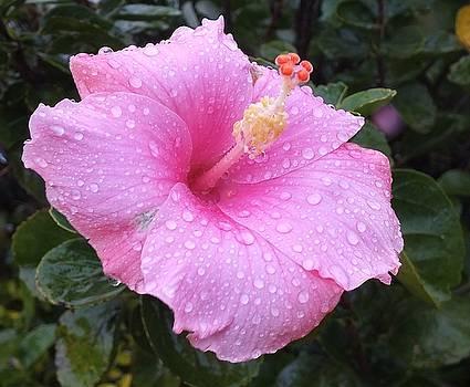 rain Drops Keep Falling by Sandra Sengstock-Miller