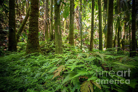 Rain Forest 1 by Daniel Knighton