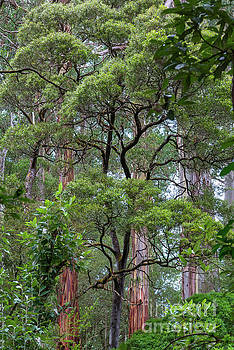 Rain forest at Melba Gully State Park by Andrew Michael