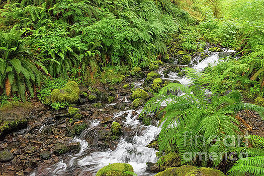 Rain Forest Waterfall by Sharon Seaward