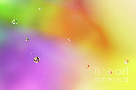 Delphimages Photo Creations - Rain pearls