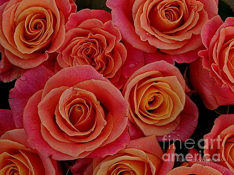 Rain Splashed Roses by Lainie Wrightson