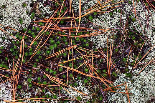Rain Study#15, Pine Barrens by Steve Gravano