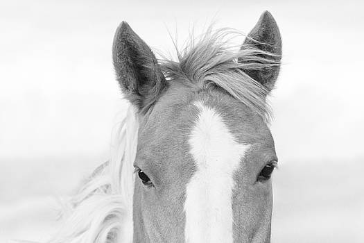 Rain the Horse Black and White by Stephanie McDowell