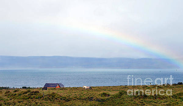 Rainbow and Icelandic Horses by Catherine Sherman