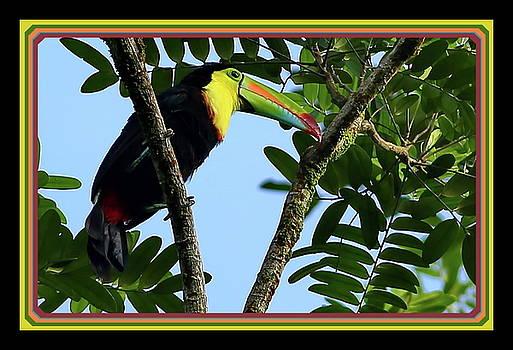 Rainbow beak by BYETPhotography