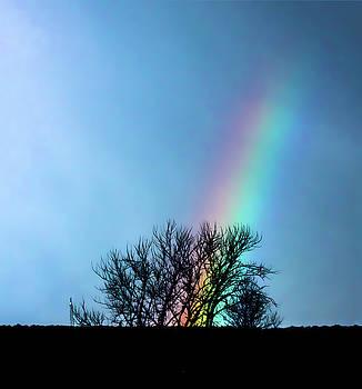 Rainbow behind Tree Branches by William Cruz
