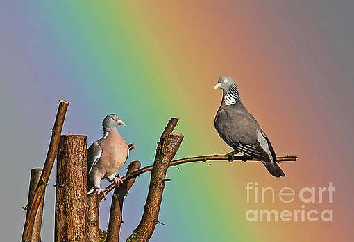 Rainbow birds by Jean-Luc Baron