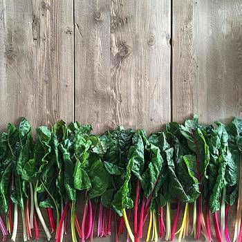 Rainbow Chard by Erika L