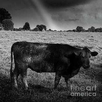 Rainbow Cow by Brian Jones
