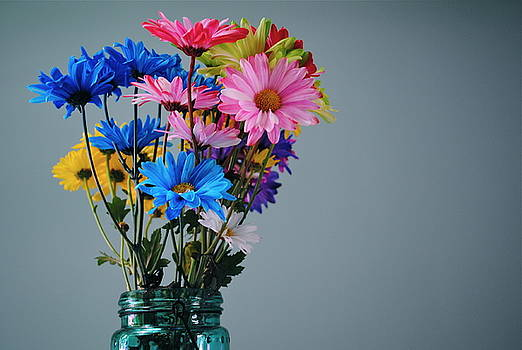 Rainbow Dasies by Amanda Letcavage