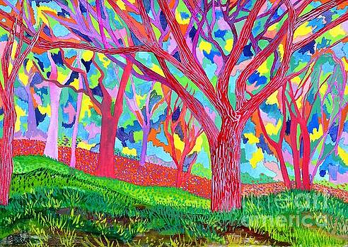 Caroline Street - Rainbow Forest