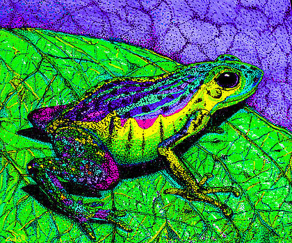 Nick Gustafson - Rainbow frog 2