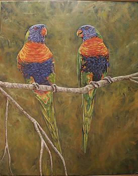 Rainbow Lorikeets by Jason  Swain