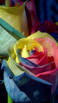 Karen Musick - Rainbow of Love