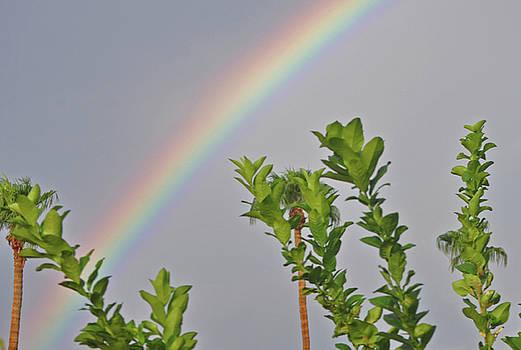Rainbow Over Home by Jay Milo