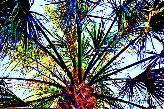 Rainbow Palm by Jill Tennison