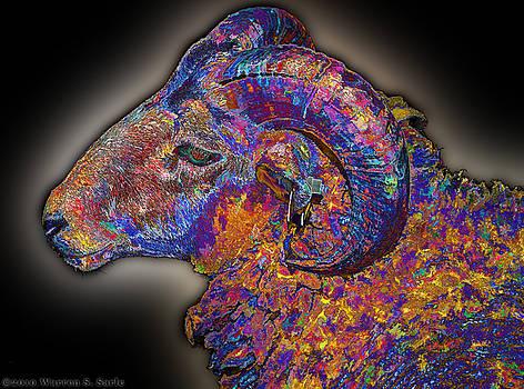 Warren Sarle - Rainbow Ram 026