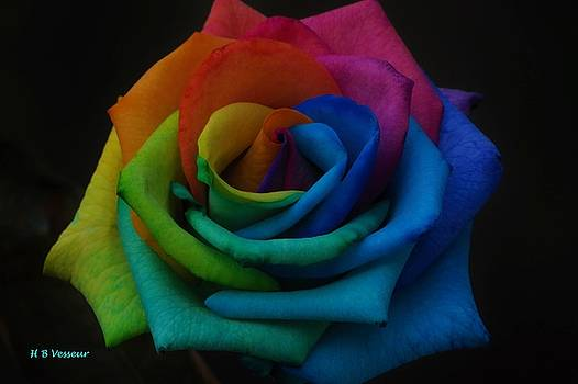 Rainbow Rose by B Vesseur