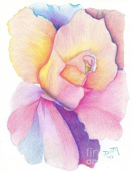 Rainbow Rose by Dusty Reed