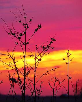 Rainbow Sherbert Skies by Lori Frisch
