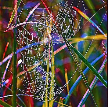 Buddy Scott - Rainbow spiderweb