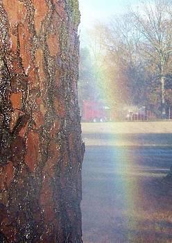 Rainbow by Susan Anderson