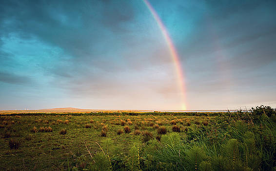 Svetlana Sewell - Rainbow
