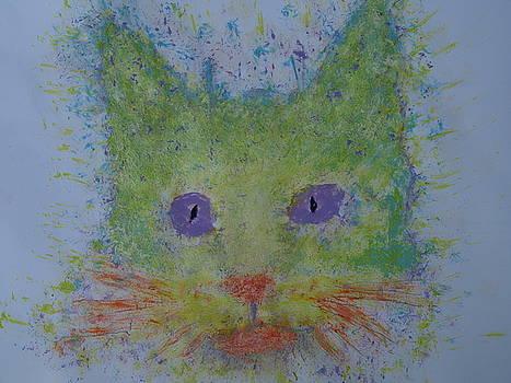 Rainbow tomcat by Iancau Crina
