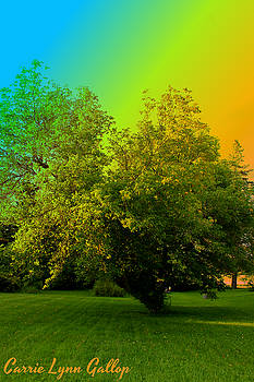 Rainbow Tree Art by Carrie Gallop