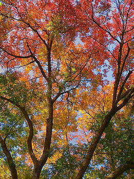 Rainbow Tree by Tom Kidd