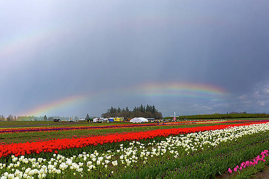 Rainbows at Tulip Festival by David Gn