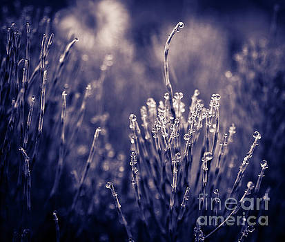 Raindrop Jewels by Beth Riser