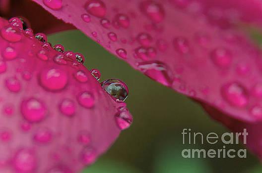 Raindrop by Leonardo Fanini