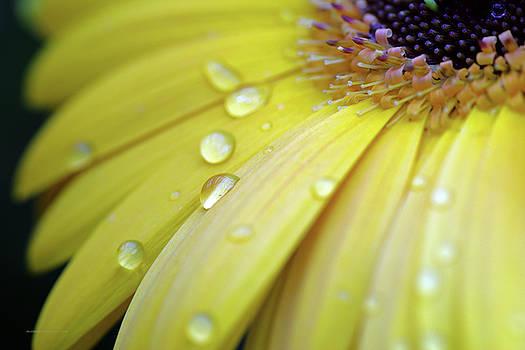 Raindrops #1 by Edward Congdon