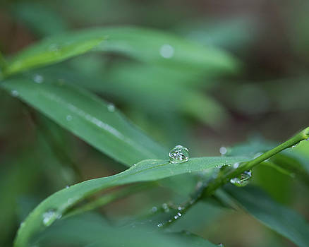 Raindrops by Brian Stricker