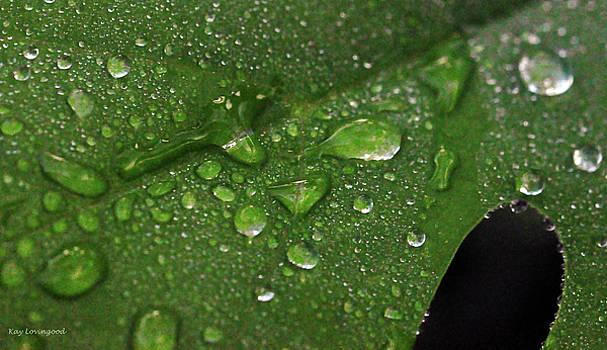 Kay Lovingood - Raindrops