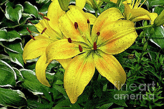 Raindrops on Daylily Petals with watercolor filter by Jenness Asby