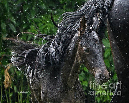 Raindrops on Roses and Whiskers on Friesians by Lori Ann  Thwing