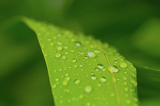 Rainfall by Steven Green