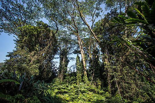 Rainforest by Anton Tolok