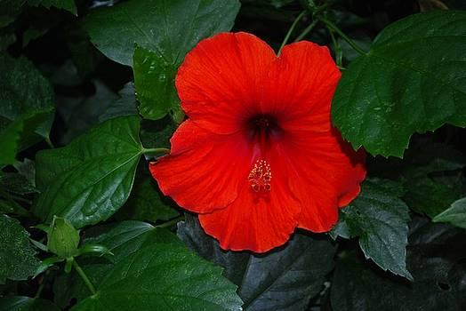 Gary Wonning - Rainforest Beauty