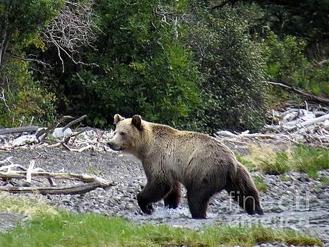 Harriet Peck Taylor - Rainforest Grizzly