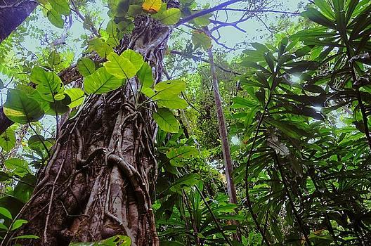 Rainforest in Paradise by Lorrie Morrison