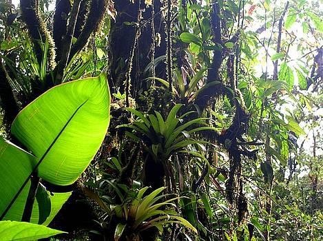 Rainforest by Matt Brennan