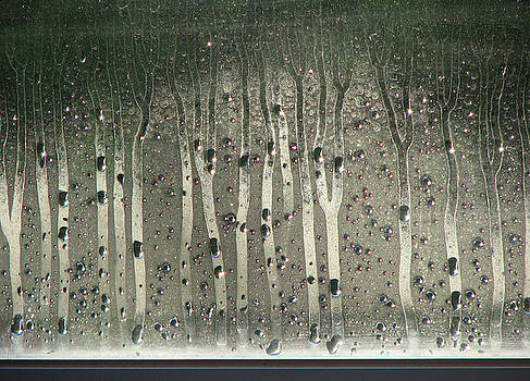 Rainforest on Glass by Rolf Olson