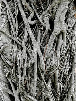 Rainforest Tangle by Sandra Sengstock-Miller